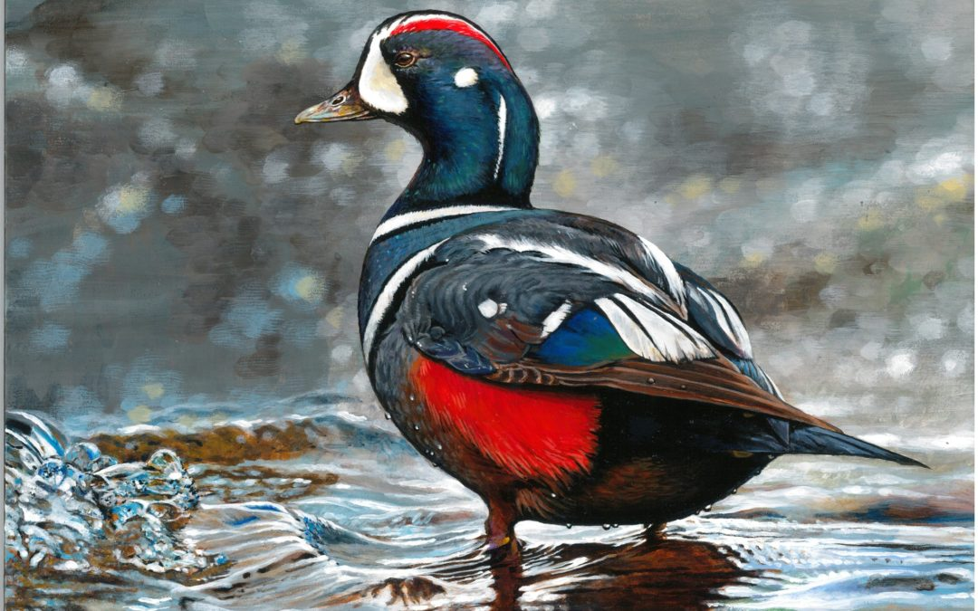 Junior Duck Stamp Winner Named