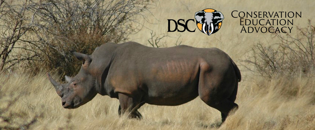 Poaching Declines in South Africa for 5th Straight Year