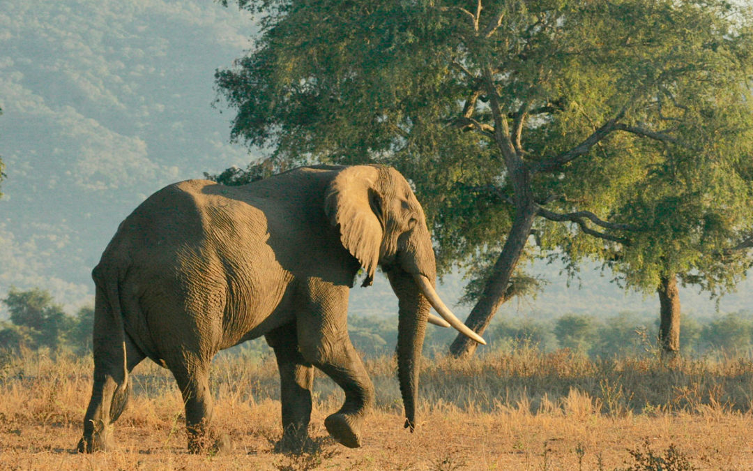 Support for Botswana's Controlled Hunting Program