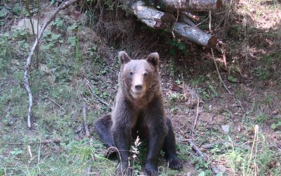 Romanian People Call for Bear Intervention