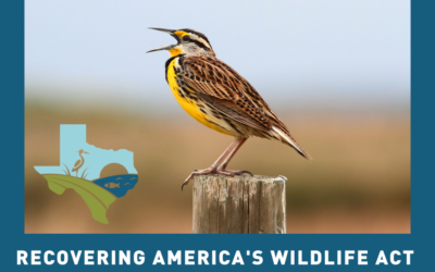 Headed to the House: Wildlife Funding Bill