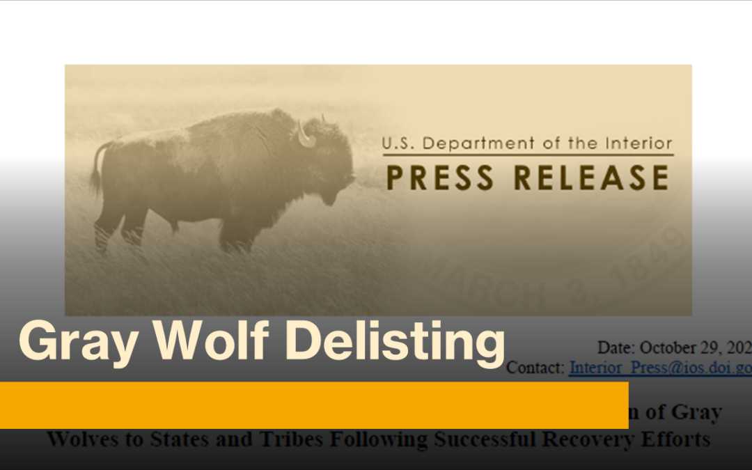 DSC Supports Gray Wolf Delisting