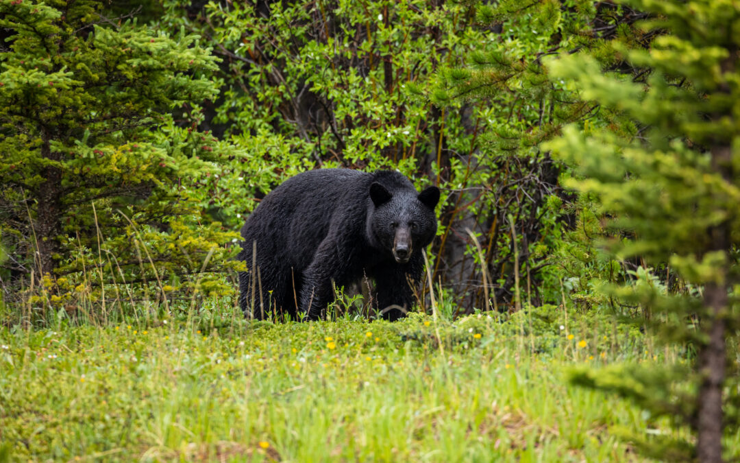 California Action Alert: SB 252 The Bear Protection Act