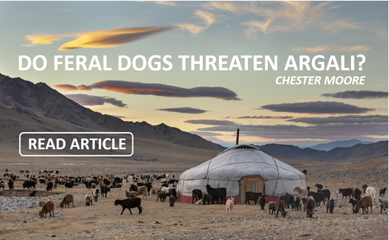 Do Feral Dogs Threaten Argali?